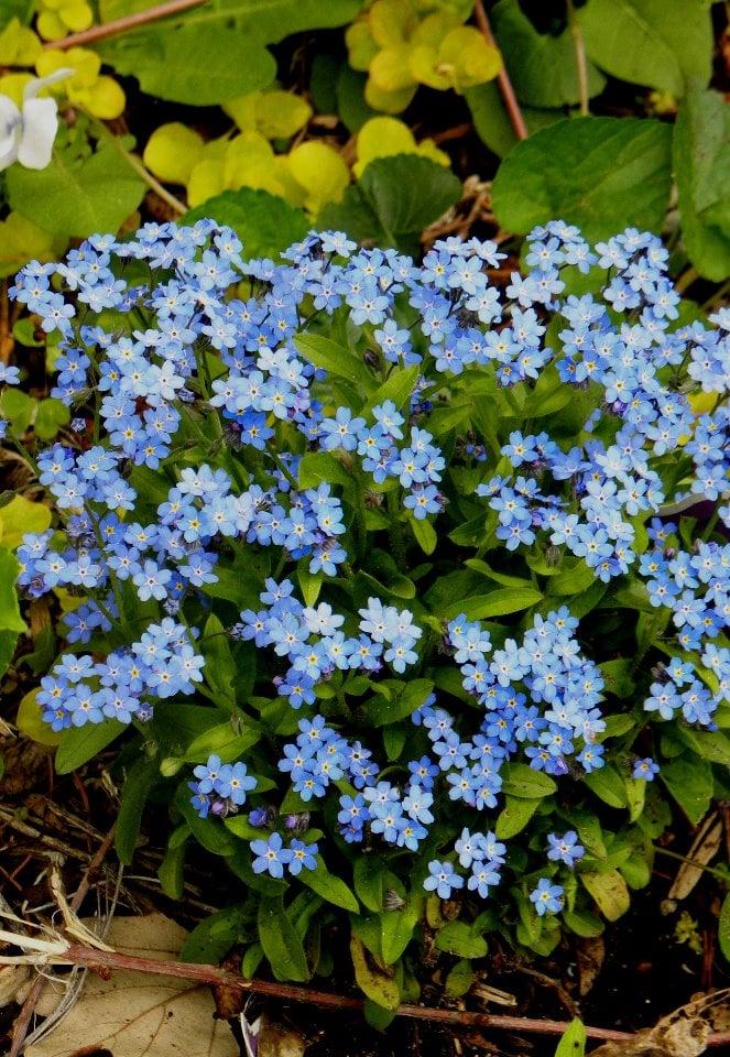 Good Old Days Eco-Florist: 270 Walsh Ave, New Windsor, NY