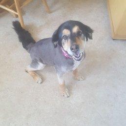 Dog Grooming Tacoma Wa