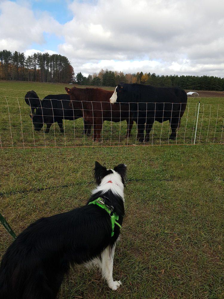 Cooper's CSA Farm & Maze