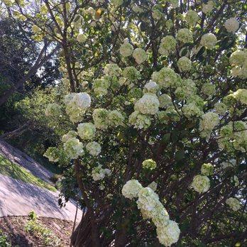 Fort Worth Botanic Garden   378 Photos U0026 129 Reviews   Botanical Gardens    3220 Botanic Garden Blvd, Arlington Heights, Fort Worth, TX   Phone Number    Yelp