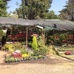 Puesto de plantas de avenida toluca viveros y jardiner a for Viveros en toluca
