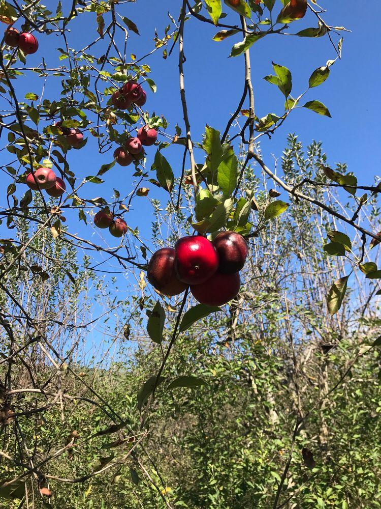 Henley's Orchard: 2192 Holly Hill Farm, Crozet, VA