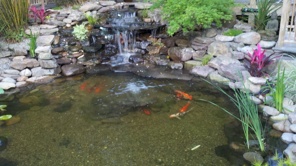 Koi pond in the back by inside the gardens outdoor seating for Koi pond builders near me
