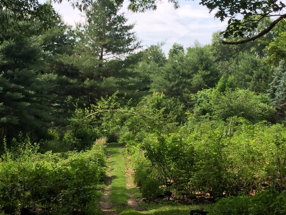 King's Tree Farm & Nursery: 44 Belvedere Rd, Boxford, MA