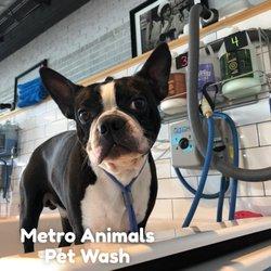 Metro Animals Pet Wash - 19 Photos & 17 Reviews - Pet Groomers