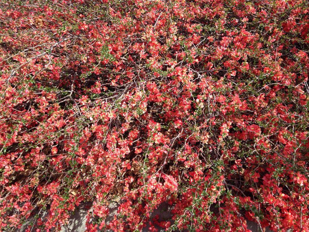 Dyck Arboretum of the Plains: 177 W Hickory St, Hesston, KS
