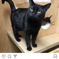 Give Me Shelter Cat Rescue - 27 Reviews - Animal Shelters - SoMa