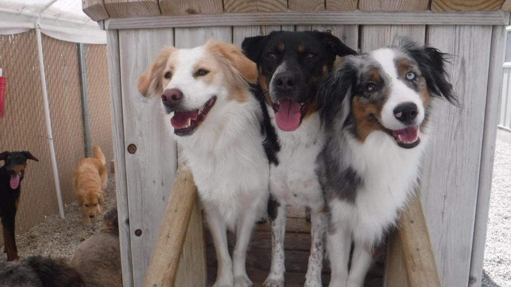 Shag Bark Pet Retreat & Spa: 21685 Grass Lake Rd, Antioch, IL
