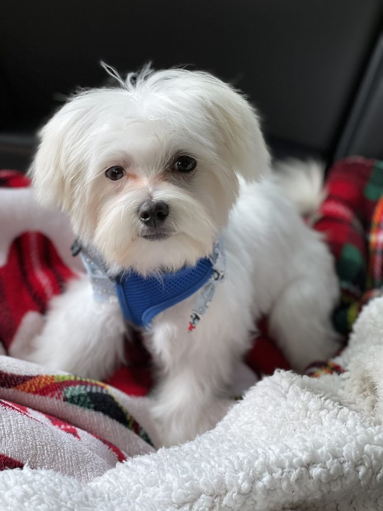 Dog City Grooming: 3951 N Federal Hwy, Pompano Beach, FL