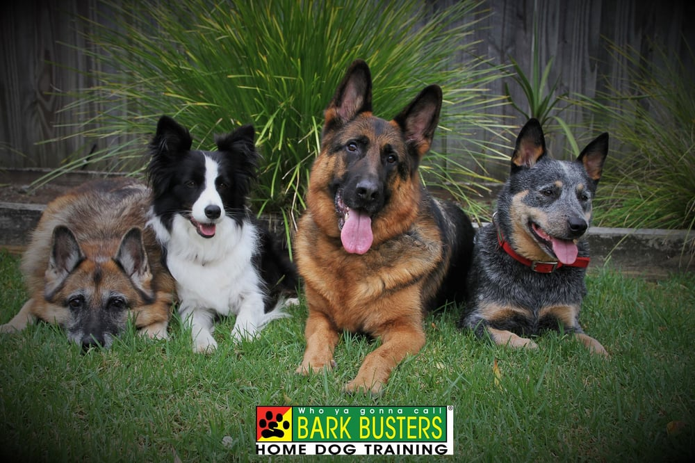 Bark Busters Home Dog Training Northern Virginia: Ashburn, VA