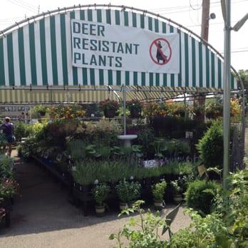 garden store morristown nj. photo of morristown agway - morristown, nj, united states. ha ha, deer garden store nj t
