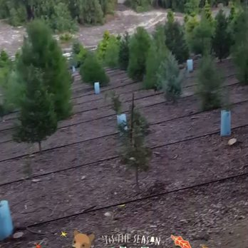 Christmas Ranch Tree Farm