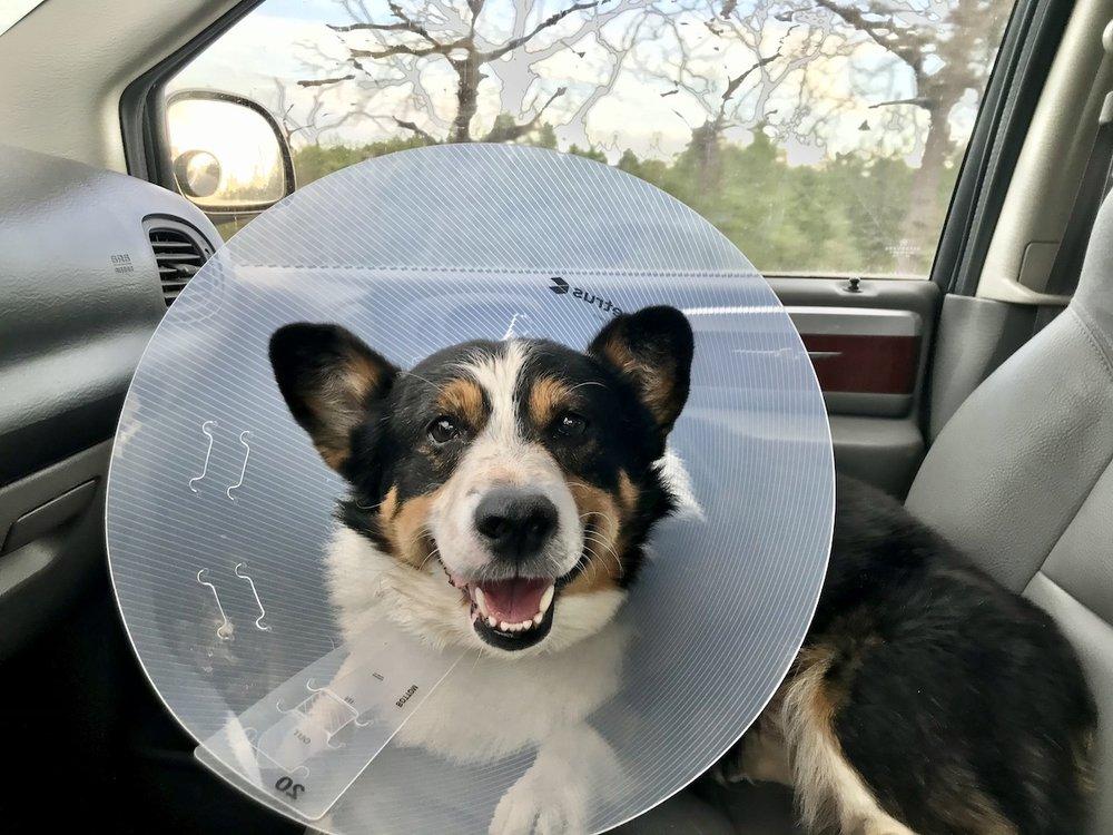 Bastrop Veterinary Hospital: 2900 Hwy 95, Bastrop, TX