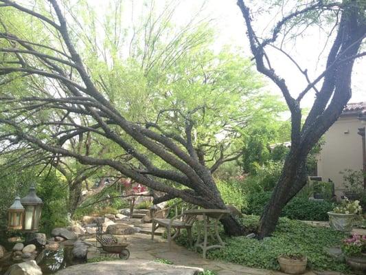 AA Arrow Tree Service & Olive Spraying - Tree Services - 2430 E ...