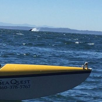 Sea Quest Kayak Tours - 2 Front St, Friday Harbor, WA - 2019