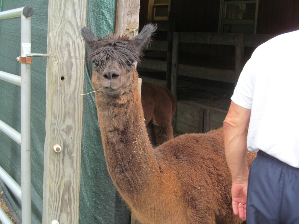 Alpaca Dreams: 2714 Schloss Rd, Louisburg, NC