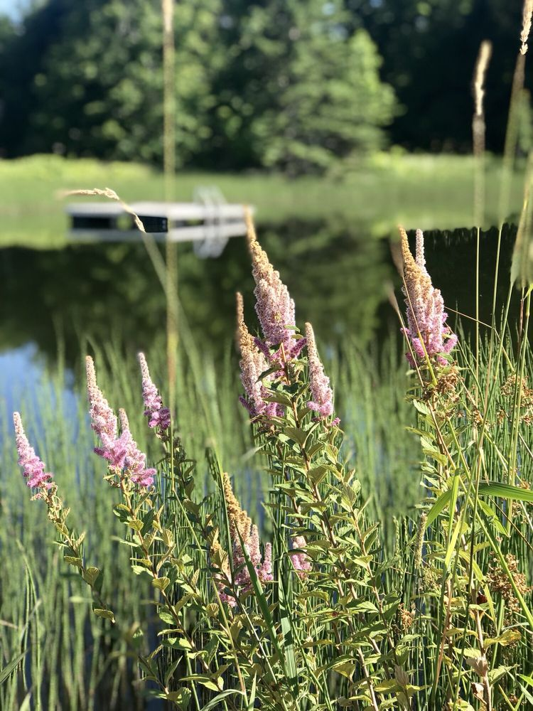 Cliff Haven Farm Bed and Breakfast: 5463 Lake Rd, Newport Center, VT