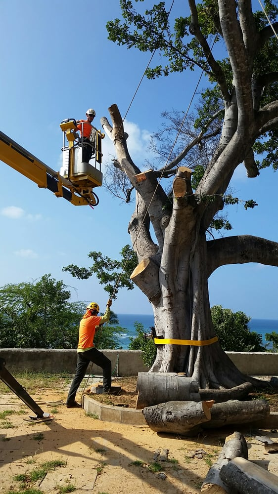 Oahu Tree Works