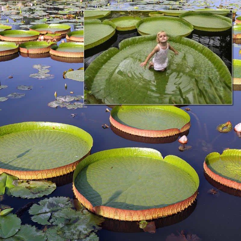 Uberworld Travel: 2725 Park Dr, Clearwater, FL