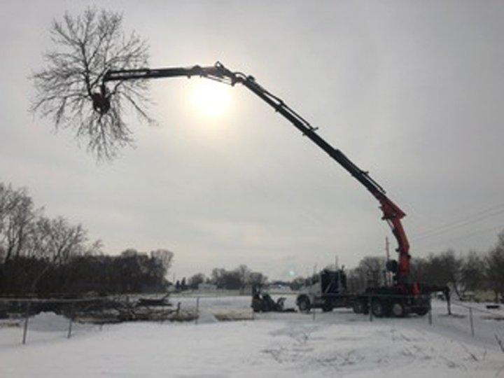 Cut Rite Tree Service: Fulton, IL