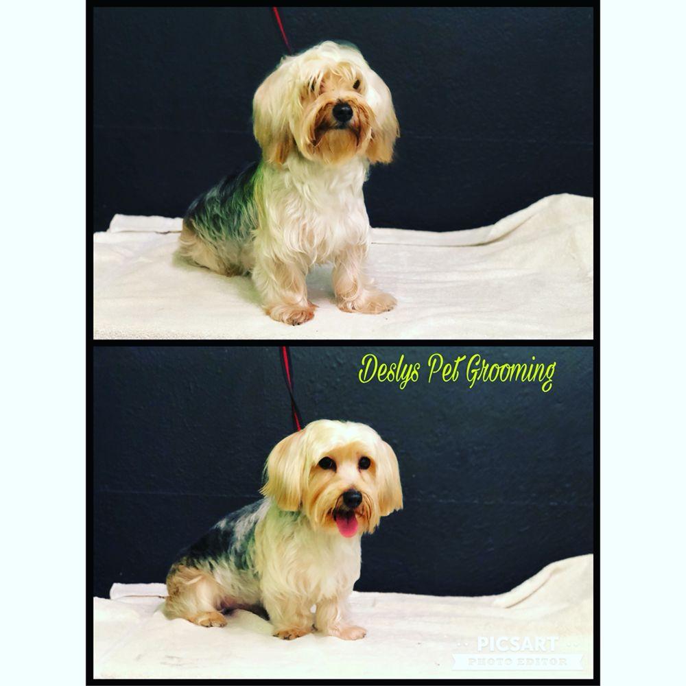 Desly's Pet Grooming