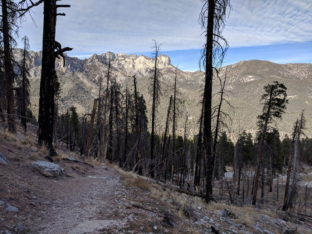 Griffith Peak Trail: 1208 Cathedral Picnic Area, Mount Charleston, NV