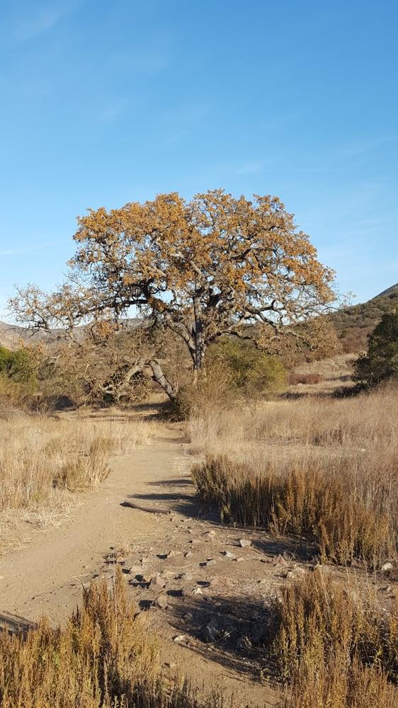 Pentachaeta Trail: 32100 Triunfo Canyon Rd, Westlake Village, CA