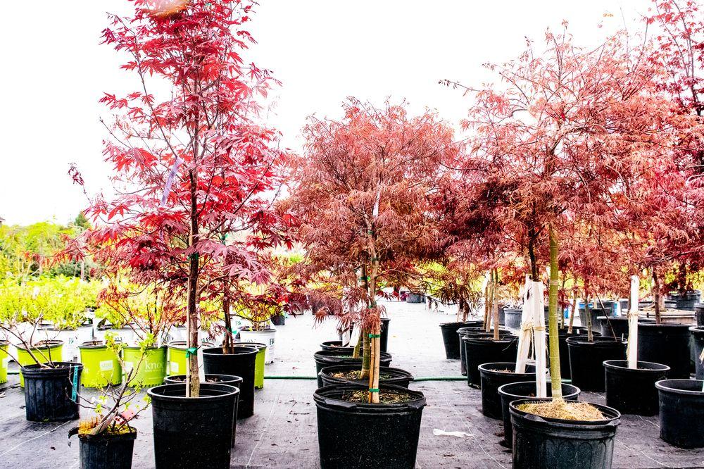 Bob's Trees - Nursery Stock & Christmas Trees: 1227 West Galway Rd, Hagaman, NY