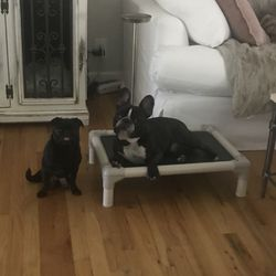 Star Maker Dog Training - 24 Photos - Pet Training - Clovis, CA