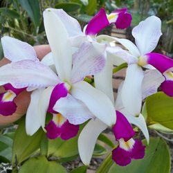 Photo Of Mickey S Orchids Fort Lauderdale Fl United States