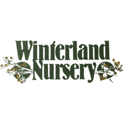 Winterland Nursery Nurseries Gardening 5655 Lincoln Rd