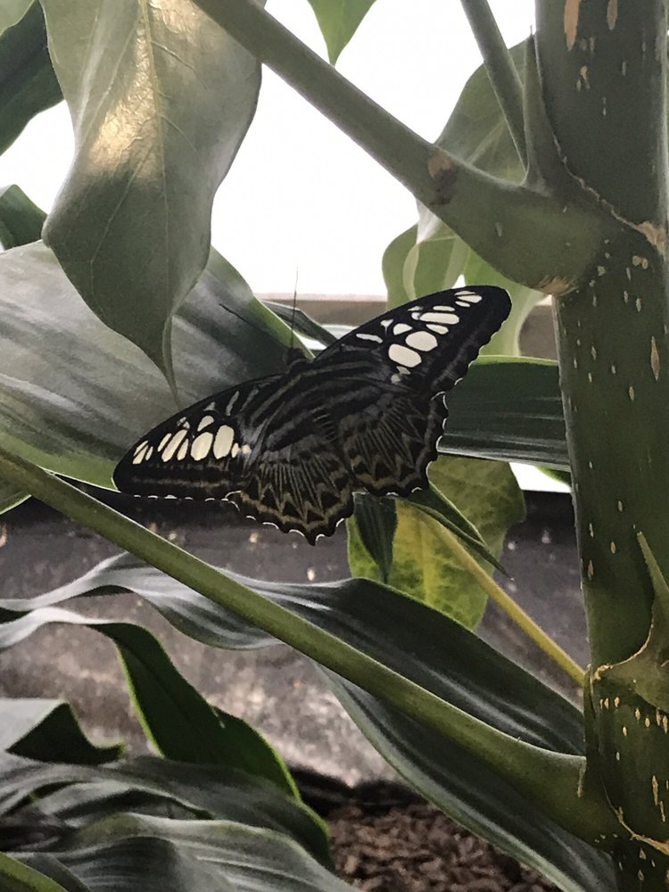 Photo Of The Smithsonian Butterfly Habitat Garden   Washington, DC, United  States