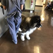 Access Woodland Hills >> Access Specialty Animal Hospital 108 Photos 486 Reviews