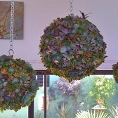 High Quality Photo Of Garden Accents   Gilroy, CA, United States. Another Succulent  Design By