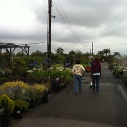 Moneta Nursery Thenurseries