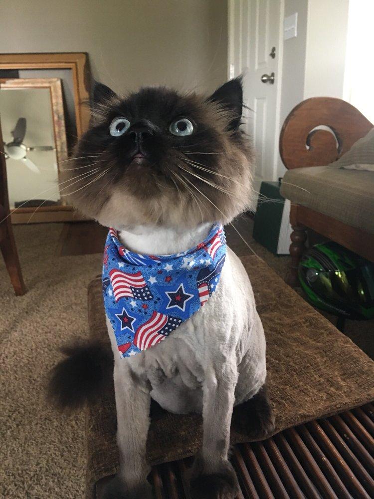 Grooming Pretty Pets: 20254 42nd Ave E, Spanaway, WA