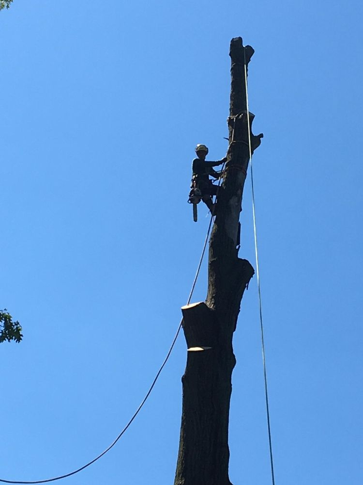 Jet Green Tree Services: Broomall, PA