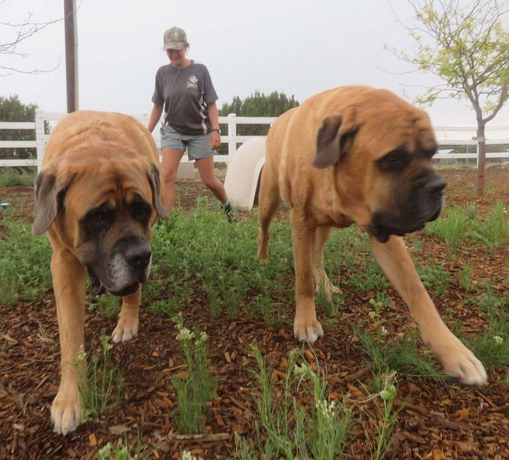 Cinder Hills Boarding Kennel: 11110 Townsend Winona Rd, Flagstaff, AZ