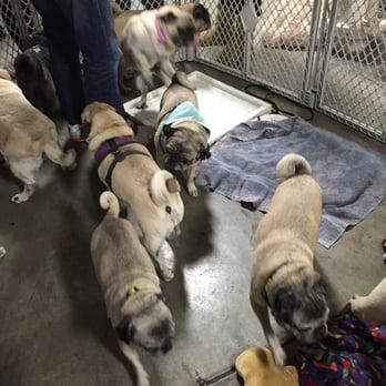 Bay Area Pet Expo 144 Photos 32 Reviews Pet Adoption 344
