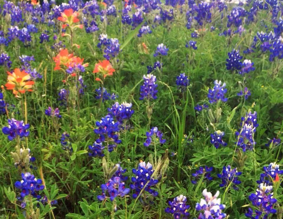 Kozy Lakes RV Park: 111 Robins Nest Dr, Jewett, TX