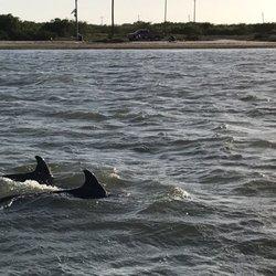 Top 10 Best Dolphin Watching In Port Aransas Tx Last Updated