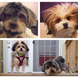Salon dog 54 photos 102 reviews pet groomers 2542 w photo of salon dog chicago il united states solutioingenieria Gallery
