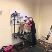 Midges pet grooming 21 photos pet groomers 2410 17th st beautyfur dog grooming solutioingenieria Choice Image