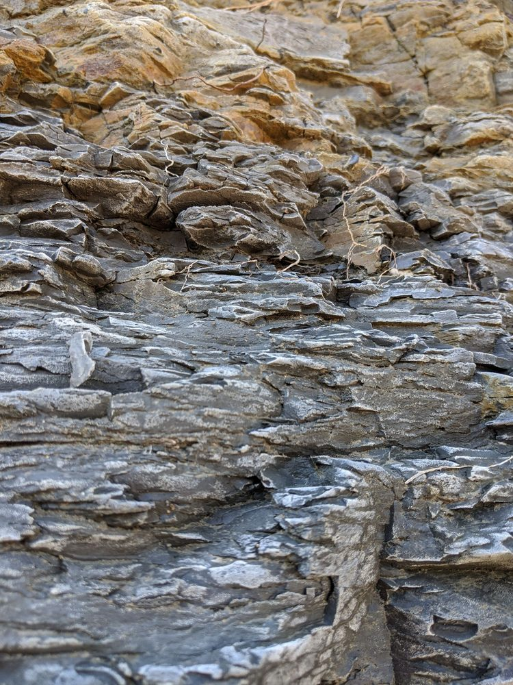 Ladonia Fossil Park: TX Hwy 34, Ladonia, TX