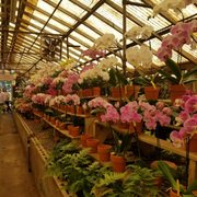 Campbell S Greenhouses