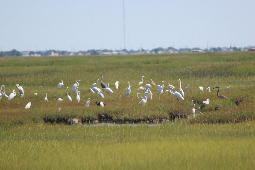 Birding By Boat on the Osprey: 1212 Wilson Dr, Cape May, NJ