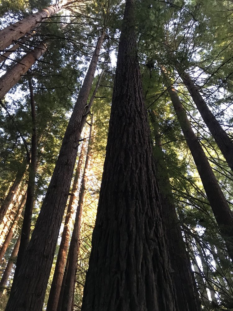 Navarro River Redwoods State Park: Albion, CA