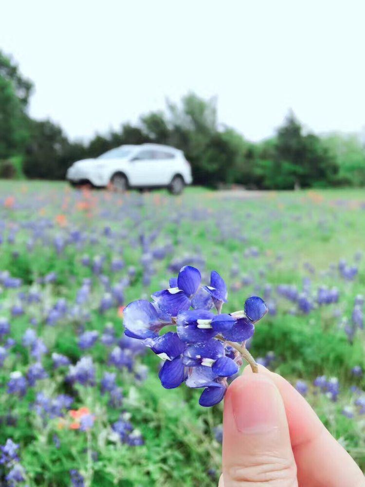 Ennis Bluebonnet Field: 204 W Knox St, Ennis, TX