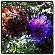 Jardin des plantes 100 photos 72 reviews botanical for 57 rue cuvier jardin des plantes