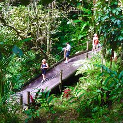 Delicieux Photo Of Hawaii Tropical Botanical Garden   Papaikou, HI, United States.  The Boardwalk